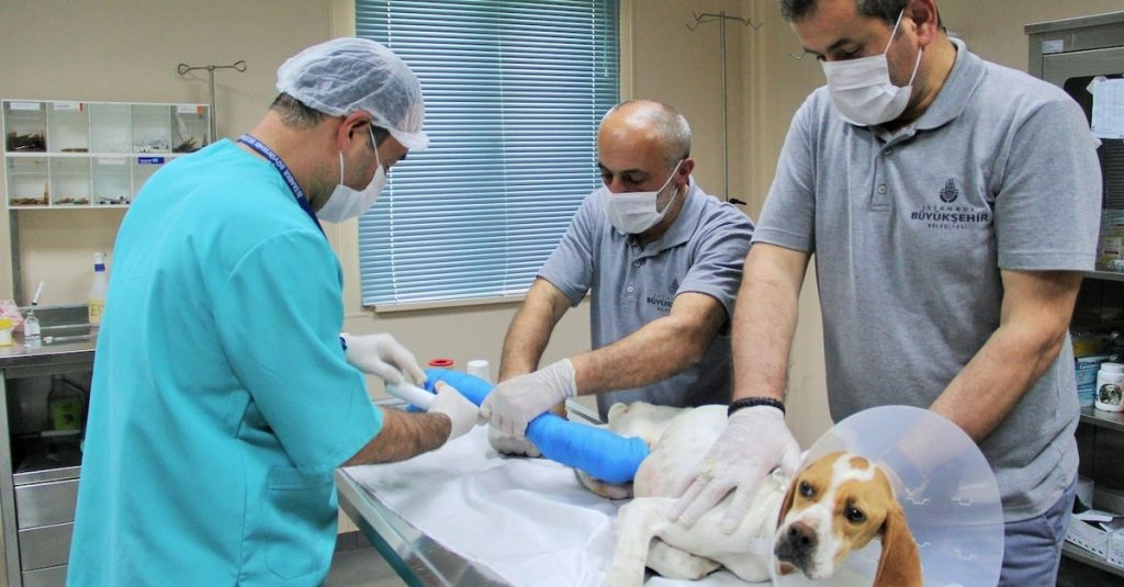 What Do Vet Hospitals Need To Do To Gain Recognition?